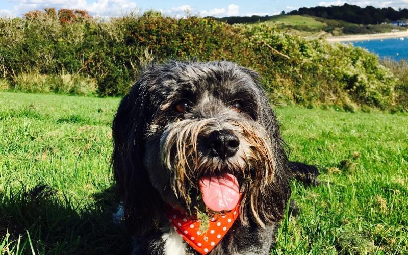 Daisy enjoying the Cornish Beaches