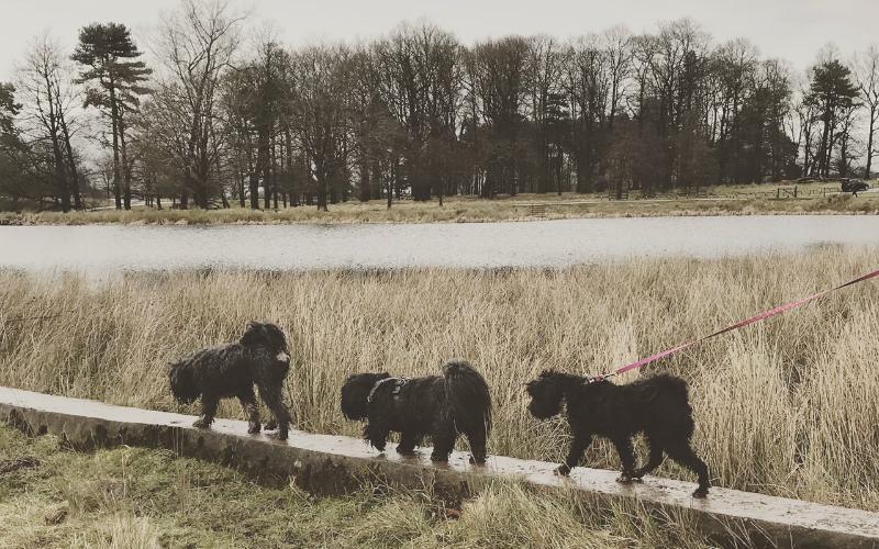 Daisy, Rokit & Zoe